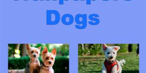 Обои - Собаки